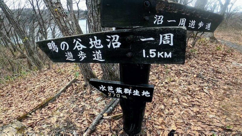 【鴫の谷地沼 水芭蕉群生地】ピークは4月~5月 春の山形蔵王温泉    Enjoying-the-many-beautiful-Mizubasho-in-the-Shiginoyachinuma-at-Yamagata-Zao-Onsen-Ski-Resort-in-April.jpg