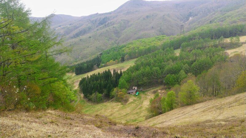【横倉の壁トレッキング タラの芽採り】初夏の山形蔵王温泉スキー場   Enjoy-trekking-to-Yokokura-no-kabe-and-picking-taranome-at-Yamagata-Zao-Onsen-Ski-Resort-in-early-summer.jpg