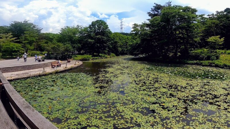 【ヤマボウシ6月見頃 草木が急成長】山形蔵王 野草園開花ラッシュ   June-Yamagata-Zao-yasouen-is-blooming-rush-and-yamaboushi-awesome.jpg