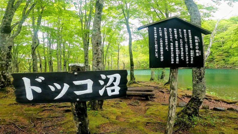 【コシアブラ5月中央高原 ダイエット登山】山形蔵王温泉スキー場   Enjoy-diet-trekking-and-picking-koshiabura-at-Yamagata-Zao-Onsen-Ski-Resort-in-May.jpg