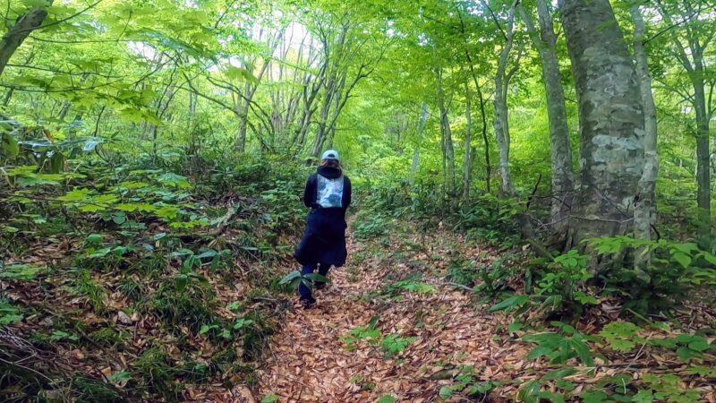 【ダイエット山形蔵王】ゲレンデトレッキング 中央高原で山菜採り!yamagata-zao-mountain-trail.jpg