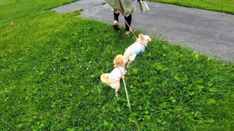 【避暑の山形蔵王 温泉街で涼しむ】ワンコやファミリー向けオススメ  Yamagata-Zao-Onsen-Ski-Resort-is-cool-in-summer.recommended-for-families-and-dogs.jpg