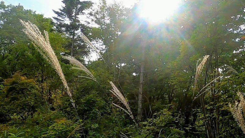 【鬼滅の刃に登場のアサギマダラ 秋ファミリー向け】山形蔵王野草園   Enjoying-the-Autumn-Season-and-Asagimadara-at-Yamagata-Zao-Yasouen.jpg