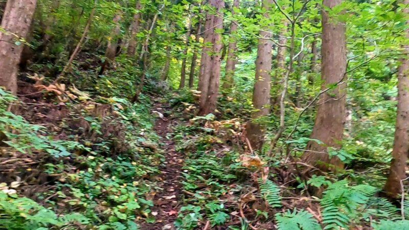 【蔵王古道不動沢トレッキング 9月紅葉情報】山形蔵王温泉スキー場   Zao-Kodou-Fudousawa-trekking-in-Yamagata-Zao-Onsen-Ski-Resort-and-information-on-autumn-leaves-in-September.jpg