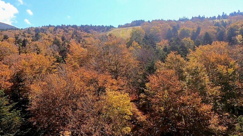 【絶景紅葉の蔵王ロープウェイどんな感じ?】おすすめな秋の見頃情報 zao-ropeway-with-spectacular-autumn-colors.jpg
